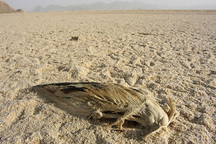حال تالاب بندعلیخان ورامین خوب نیست ، پرندگان امسال نیز به تالاب نیامدند