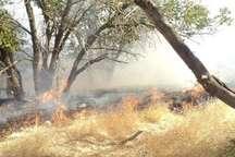 ادامه آتش سوزی در 8 هکتار از جنگلهای شهرستان لنده