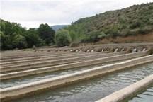 ظرفیت تولید سه هزار تن ماهی گرم آبی در کهگیلویه و بویراحمد