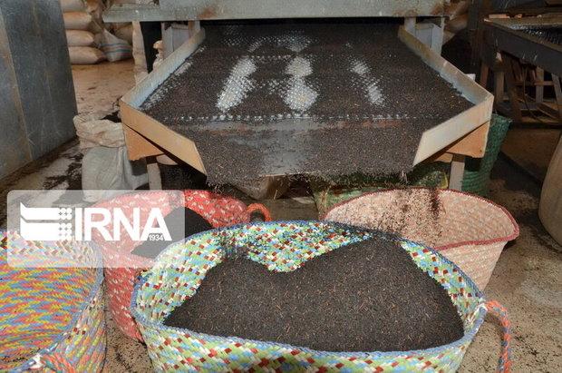 فله فروشی، برند معکوس چای مازندران