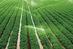 اختلاف دیدگاه ها مشکل آب کشاورزی کشور را حل نمی کند