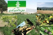 78 میلیارد ریال غرامت به باغداران خراسان رضوی پرداخت شد