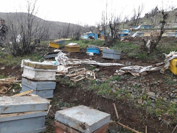خرس های گرسنه به کندوهای عسل زنبوردار سروآبادی حمله کردند