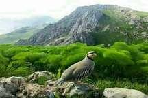 فرهنگ سازی رکن مهم حفاظت از طبیعت کهگیلویه و بویراحمد است