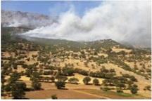 آتش سوزی در 270 هکتار از جنگل های منطقه حفاظت شده کوسالان سروآباد مهار شد