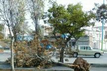 تندباد آذربایجان غربی چهار نفر را مصدوم کرد