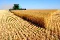 لزوم افزایش تولید ملی در جهت گسترش صنعت کشاورزی سیستان و بلوچستان