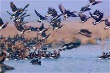مشاهده 24 درصد از گونه های پرندگان مهاجر در لرستان