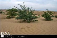 معاون منابع طبیعی خوزستان: همکاری کشورهای منطقه برای حل مشکل گرد و غبار الزامی است