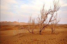 کمبود اعتبار مشکل اصلی در پیشگیری از بیابانزایی استان سمنان است