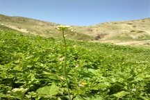 20 میلیارد ریال برای گسترش نوغانداری در خراسان شمالی اختصاص یافت