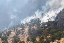 جنگل های بلوط در آزاد راه پل زال طعمه حریق شد