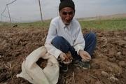 97 هزار روستایی همدان زیر چتر حمایتی بیمه اجتماعی هستند