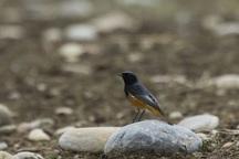 شمارش پرندگان مهاجر در کهگیلویه و بویراحمد آغاز شد