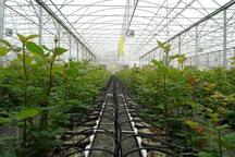 جذب سرمایه گذار در شهرک گلخانه ای نودهک تاکستان آغاز شد