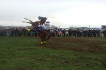 جشنواره اسب های بومی در مشگین شهر برگزار شد
