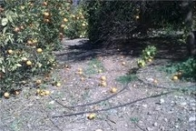 خسارت بیش از 370 میلیارد تومانی به بخش کشاورزی کردستان