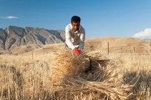 کشاورزان از حریق مزارع پیشگیری کنند