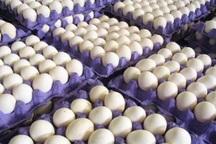 آغاز توزیع روزانه 20 تن تخم مرغ با هدف تنظیم بازار مشهد