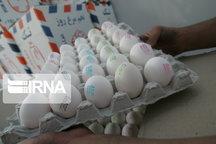۱۴ درصد تخم مرغ کشور در خراسان رضوی تولید میشود