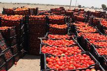 بخشدار بردخون: توسعه پایدار این بخش در گرو خروج از تک محصولی است