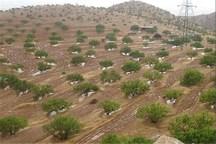 توسعه باغات در زمین های شیب دار سیاست جهاد کشاورزی است