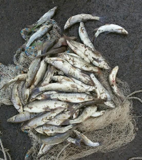 متخلفین صید غیرمجاز در طالقان دستگیر شدند