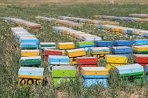 آمارگیری از کلنی های زنبور عسل در اردبیل