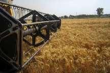 سه مرکز خرید تضمینی گندم در شوشتر دایر است