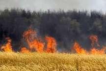 رئیس جهاد کشاورزی:40 هکتار از مزارع گندم باشت طعمه حریق شد