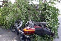 تصویر روز- خطر سقوط درختان فرسوده روی شهروندان اصفهانی
