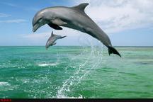 کشف لاشه ۲ قطعه دلفین در سواحل دیلم