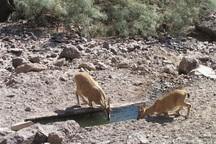 آبشخورهای حیات وحش در طارم سفلی پاکسازی شدند