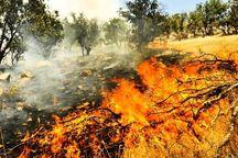 حریق ۱۲ هکتار از اراضی طبیعی چرداول را نابود کرد