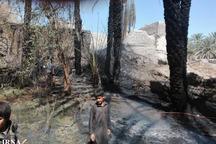 بیش از هزار نخل خرما در سراوان سوخت