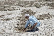سالانه 14 درصد محصولات کشاورزی هرمزگان از بین می رود