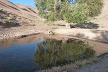 میزان آب در زیستگاههای حیات وحش خراسان جنوبی مناسب است