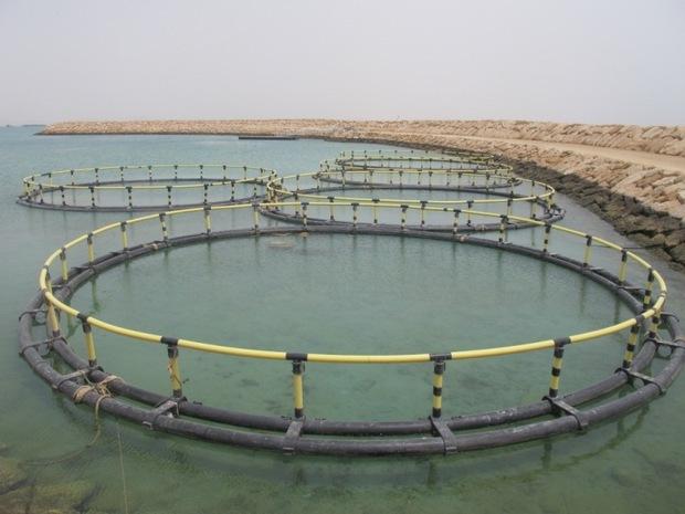 اردل ظرفیت تولید 5 هزار تن ماهی در قفس را دارد