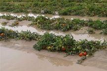 کشاورزان ساروی خسارت دیده از سیل حدود ۵۷میلیارد ریال کمک بلاعوض دریافت کردند