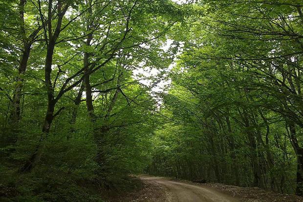 300 هزار هکتار ذخیره گاه جنگلی در کشور وجود دارد