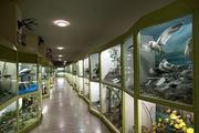 موزه تاریخ و طبیعت در قزوین راه اندازی شد