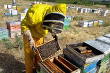 برداشت عسل در گناباد حدود سه برابر شد