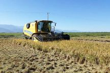 پیشبینی تولید ۱۰۸۰۰ تن شلتوک به روش خشکهکاری در گلستان