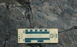 کشف کوچکترین ردپای دایناسور دنیا