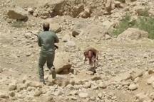 درگیری مسلحانه درمنطقه حفاظت شده خاییز کهگیلویه زخمی شدن یکی ازشکارچیان