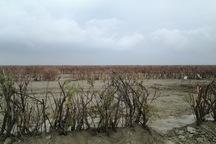200 هزار هکتار زمین حاشیه دریاچه ارومیه بیابان زدایی شد