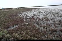 تند شدن نبض خشکسالی در تالاب بینالمللی میانکاله