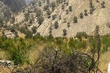 375 هکتار از باغات گچساران در معرض تنش آبی هستند
