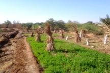 گام نخست طرح کشاورزی مقام معظم رهبری در آبادان اجرا شد