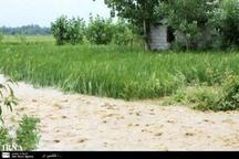 سیل به تاسیسات زیربنایی و مزارع شیروان خسارت زد